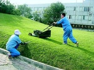 草坪绿化养护