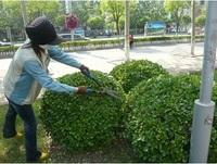 园区绿化养护